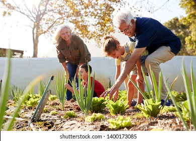 Grandchildren Helping Grandparents To Look After Vegetables On Allotment