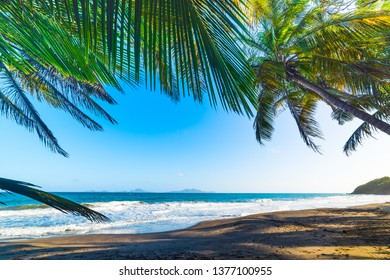 Grande Anse beach in Guadeloupe, French west indies. Lesser Antilles, Caribbean sea
