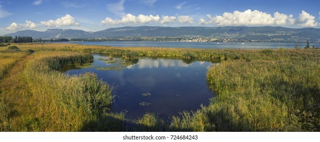 Grande Caricaie natural wildlife park, Neuchatel lake, Switzerland