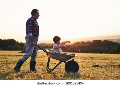 Grandfather driving his grandson in wheelbarrows at sunset