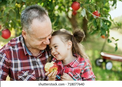 grandfather with granddaughter with Apple in the Apple Orchard. Beautiful Girl Eating Organic Apple in the Orchard. Harvest Concept. Garden, Toddler eating fruits at fall harvest.
