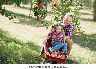 grandfather with granddaughter with Apple in the Apple Orchard. Harvest Concept. Garden, Toddler eating fruits at fall harvest. healthy childhood, vacations in the farm. Love you so much my grandpa.