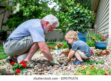 Grandfather and Grandson Bond Over Planting Flowers in the Garden