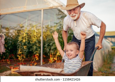 Grandfather and grandson check harvest of tomato in greenhouse.People,farming, gardening and agriculture concept.