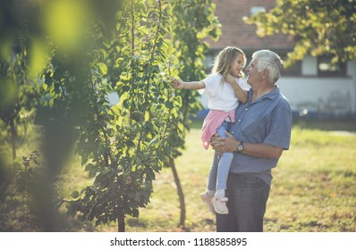 Grandfather, I love our moments in the countryside. Granddaughter and grandfather spend time in the orchard. Copy space.