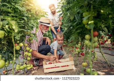 Grandfather,son and grandson working in greenhouse,enjoying together.