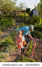 grandmather and grandchildren watering plants in the allotment garden