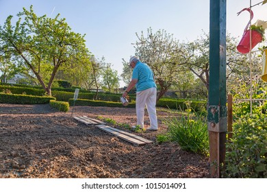 grandmother is gardening and  watering vegetable in the garden