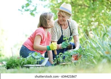 Grandmother and granddaughter gardening together