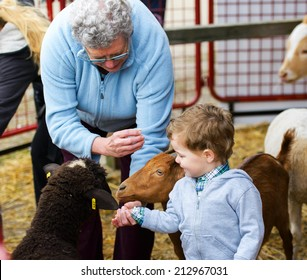 A grandmother helps her grandson feed farm animals at a fall fair.