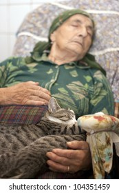 grandmother napping with cats
