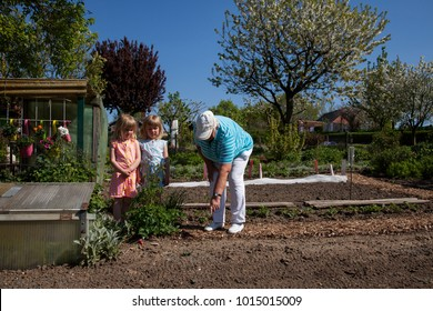 grandmother is showing and explaining grandchildren the vegetables in the allotment garden