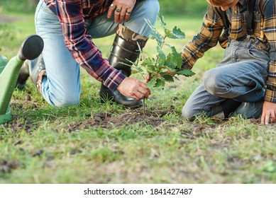 Opa mit Enkelsohn, der Eiche pflanzt, die unter anderen Bäumen im Wald in den Boden fällt. Speichern Sie das Naturkonzept.