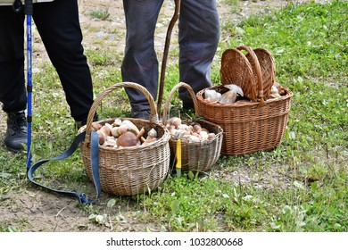 grandparents with the basket of mushrooms after autumn mushrooming in the forest