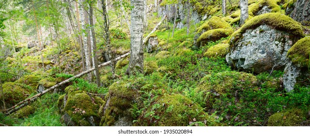 Granite rocks and canyons in Finland, natural textures. Evergreen forest. Soft sunlight. Picturesque panoramic view. Atmospheric landscape. Pure nature, ecology, environmental conservation, ecotourism
