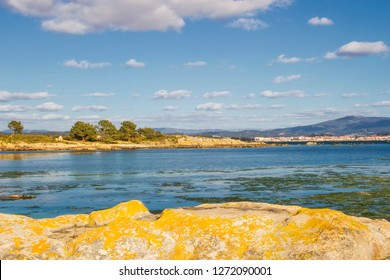 Granite rocky cape with pine trees on the coastline of Carreiron natural reserve in Arousa island