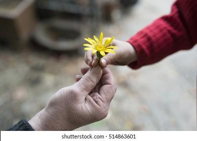 Abuela y nieta cediendo flores