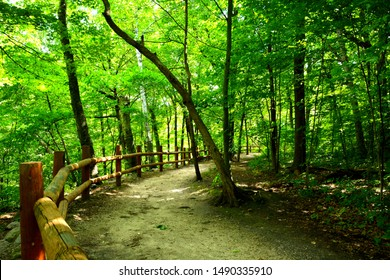 A Grant Park pathway with beautiful wooden hand railing and guardrail above the Oak Creek deep below in the ravine.  Sunlight finds its way through the branches above to light a few spots.