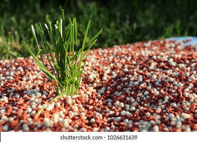 Granular autumn lawn fertilizer standing for healthy and strong lawn grass