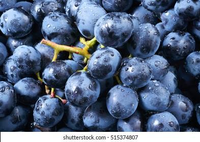 Grape background. Dark grape. Blue grape. Wine grape. With drops.