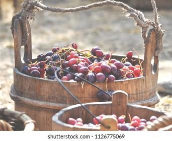 Grape in a basket
