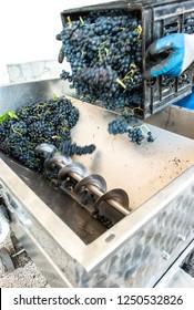 Grape crushing machine in a winery.