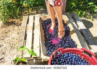 Grape crushing ritual in vintage festivals