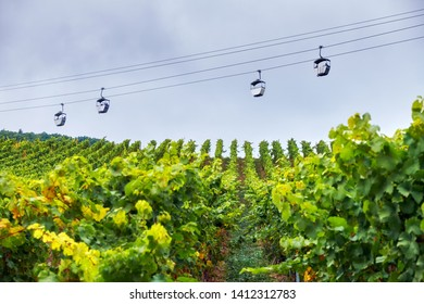 Grape fields with ropeway above them in Germany Rudesheim am Rhein town