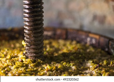 Grape harvest: Wine press with white must and helical screw