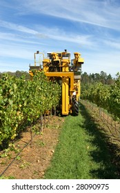 A grape harvester in a vineyard on the Southern Highlands of New South Wales, Australia