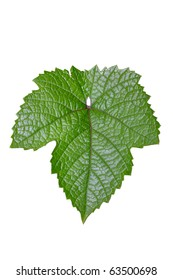 Grape leaf. Isolated object on a white background