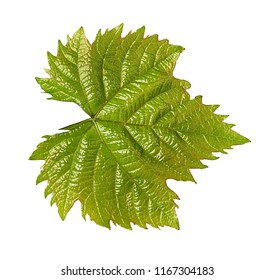 Grape leaf isolated on white background with clipping path