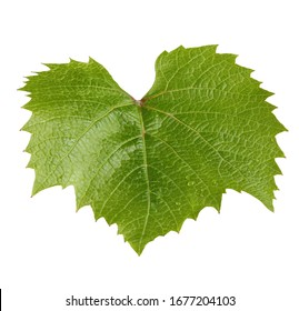 grape leaf isolated on white background. green leaves with water drops.