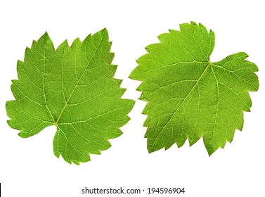 Grape Leaf Images Stock Photos Vectors Shutterstock