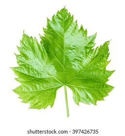 grape leaf isolated on white background Clipping Path