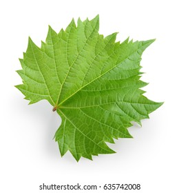 Grape leaf isolated on white. Full depth of field.