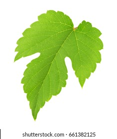Grape leaf isolated on a white