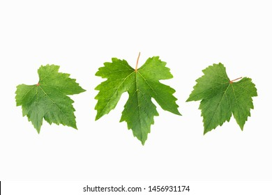 Grape leaves for decorate or background isolated on white
