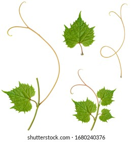 grape leaves. fragments for creating patterns on a white background.