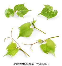 Grape leaves isolated on white background. Collection.