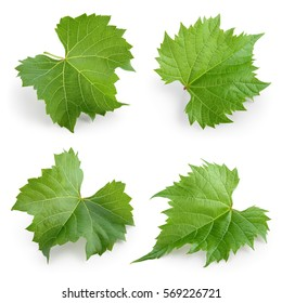 Grape leaves isolated on white. Collection. Full depth of field.
