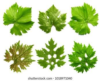 grape leaves on white