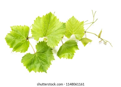 Grape leaves on white background. Green vine leaf