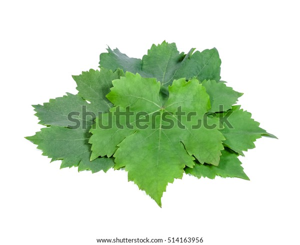 Grape Leaves On White Background Stock Photo Edit Now 514163956