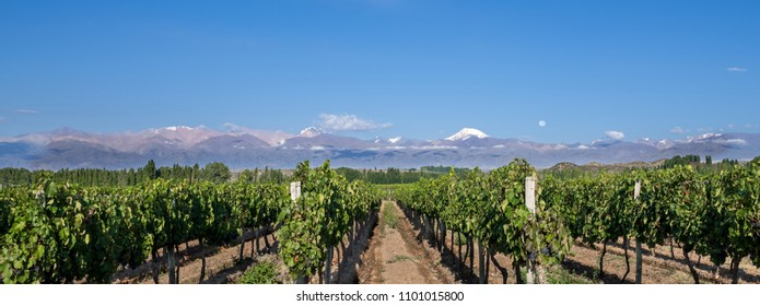 Grape plantation mountains and the moon in Valle de Uco, Mendoza, Argentina