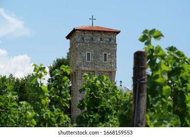 Grape plantations in Tvrdos Monastery - 15th-century Serbian Orthodox monastery near Trebinje city, Republika Srpska, Bosnia and Herzegovina