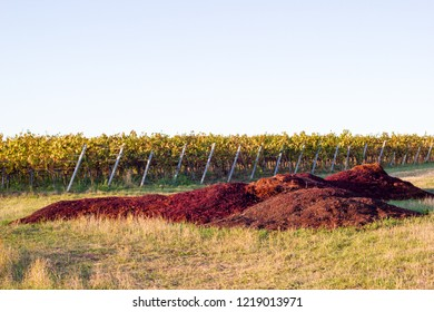 Grape pulp after harvest within the green wineyards to produce wine from the grapes. Concept of waste product within wine making process.