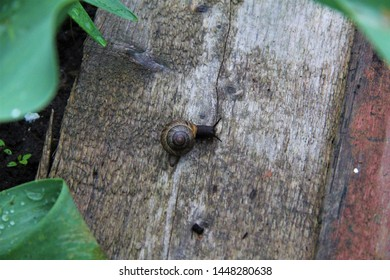grape snail sits on a wooden surface on a blurred background. Close up - Shutterstock ID 1448280638