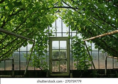 Altes Gewachshaus Images Stock Photos Vectors Shutterstock
