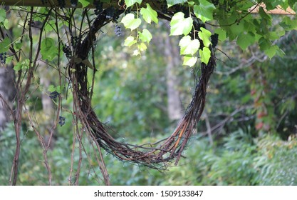 A grape vine wreath hanging under a grape arbor